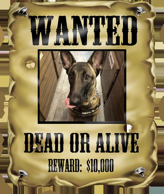 Wanted_Naikapng
